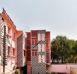 pink-zebra-3