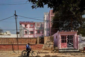pink-zebra-9