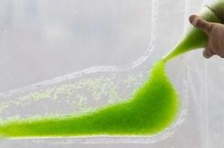 photosynthetica-4