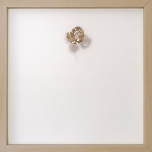 oltre la nebbia 4, 2020 - foglia vera su carta e foglio traslucido forato - 25 x 25 cm