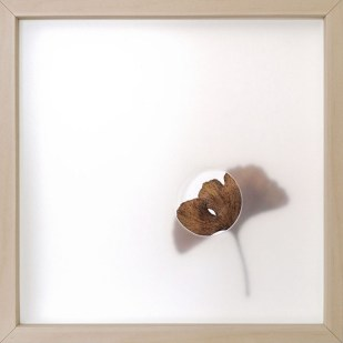 oltre la nebbia 5, 2020 - foglia vera su carta e foglio traslucido forato - 25 x 25 cm
