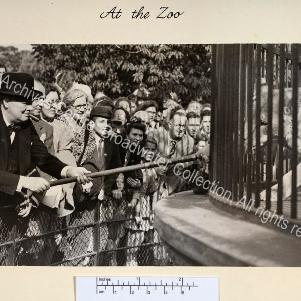 "Photo shows WSC leaning forward holding a stick through the bars of a cage to feed a lion [""Rota""]. WSC is wearing a suit and hat and has a cigar in his mouth."