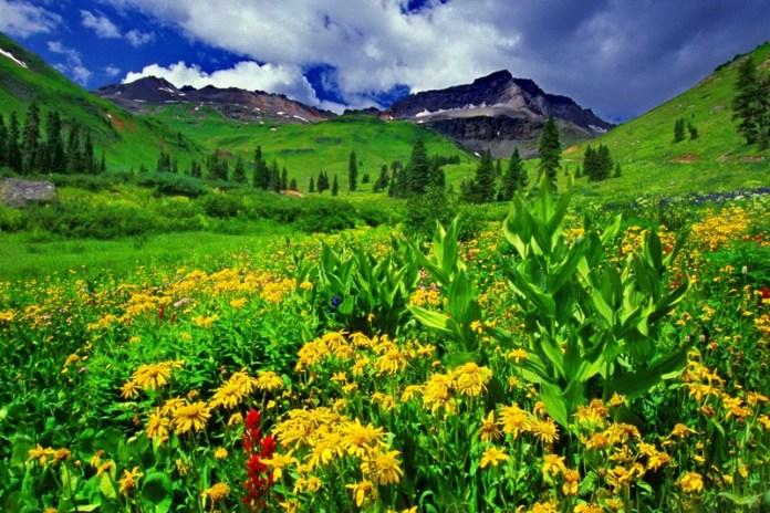 ClioMakeUp-colore-anno-2017-natura-verde-paesaggio