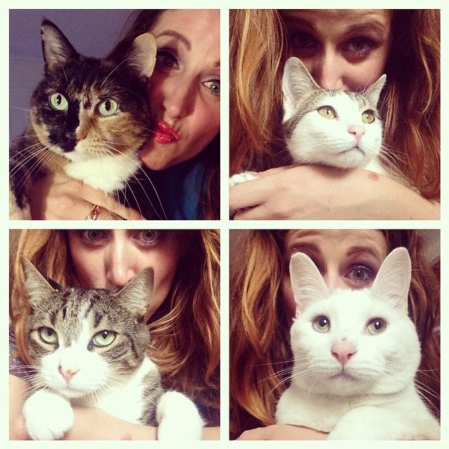 cliomakeup-gatti-in-gravidanza-3-domestici