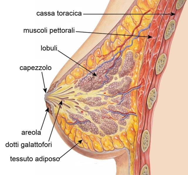 cliomakeup-come-cambia-il-seno-in-gravidanza-1