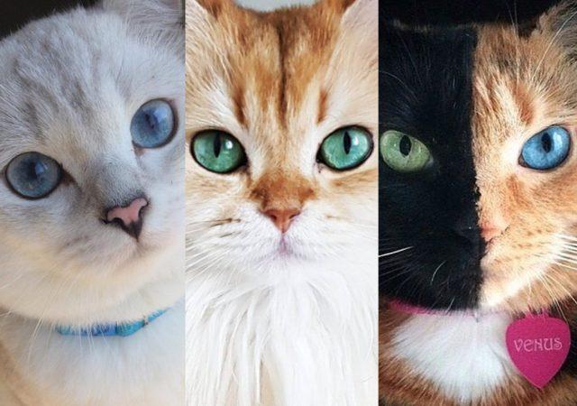 cliomakeup-gatti-famosi-instagram-20