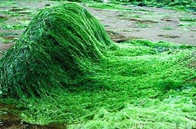 cliomakeup-spirulina-23-alga-spirale