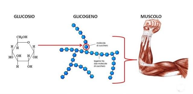 cliomakeup-dimagrire-velocemente-glicogeno
