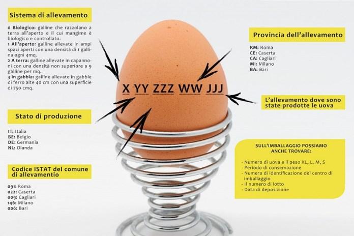 cliomakeup-leggere-uova-17