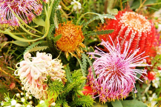 cliomakeup-creme-contorno-occhi-preferite-team-14-Australian-Bush-Flower