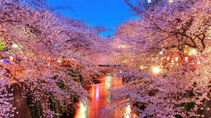 cliomakeup-viaggi-nella-natura-9-hanami-notte
