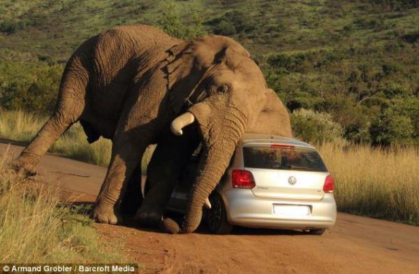 أخبار 24 | فيل يستخدم سيارة بها شخصان ليحك جسده (صور)