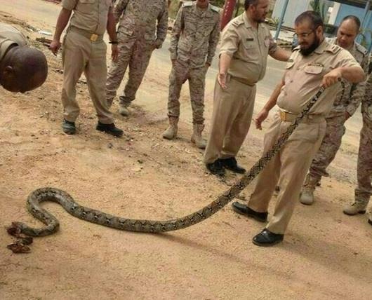 أخبار 24 | حيّة عملاقة تفاجئ أفراد قاعدة الملك فيصل ...