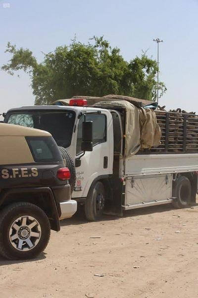 """""""Environmental security"""" A number of sellers of firewood are arrested in the city of Riyadh for violating the rangelands and forests law and its implementing regulations"""