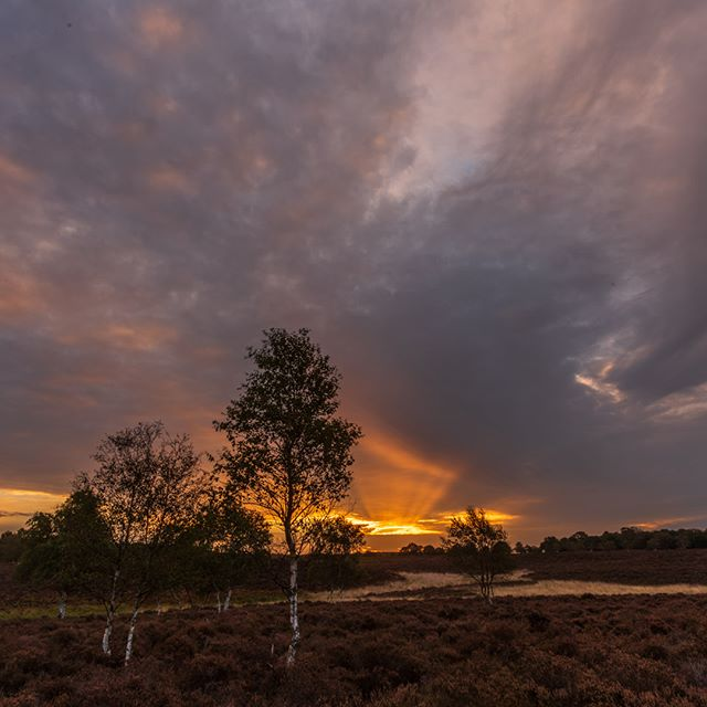 Great morning on Dunwich Heath today. Up early to get the sunrise at meet up with a great fellow photographer @photographer_dibs