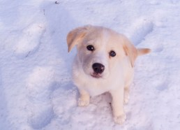 Snow Puppies 5