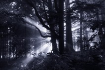 The Dark Forest 5