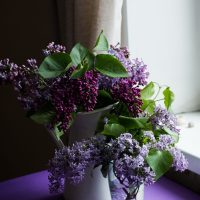 Coping with unlucky lilac in the house