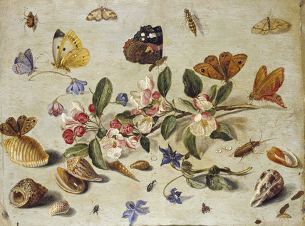 Image result for insects in renaissance painting
