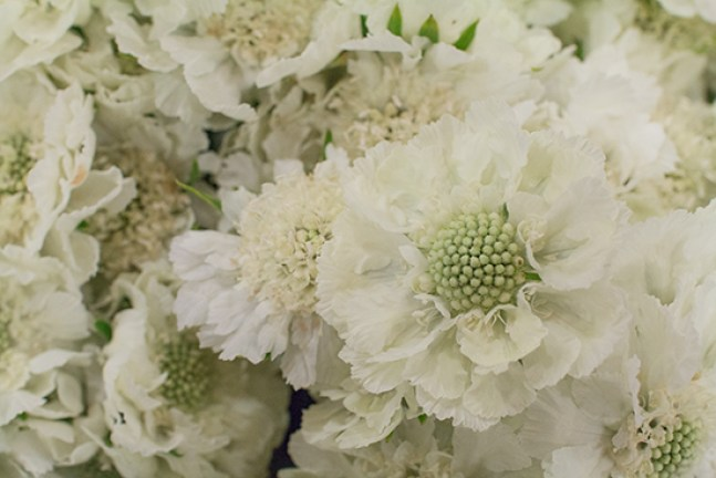 Image result for covent garden scabious white