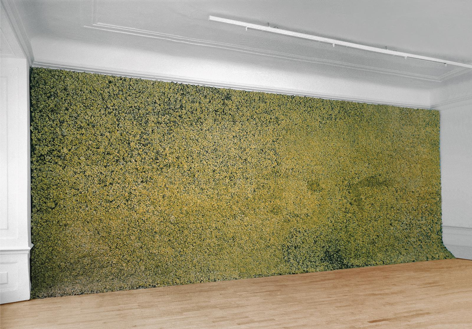 Moss Wall Artwork Studio Olafur Eliasson