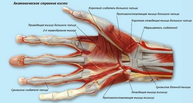 Что покажет МРТ руки или ноги