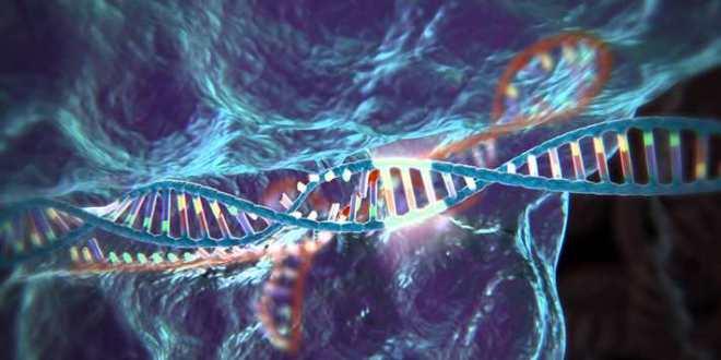Les scientifiques britanniques autorisés à modifier des gènes dans les embryons humains
