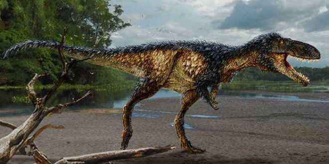 Une nouvelle espèce du T-Rex explique la grande taille des Tyrannosaures