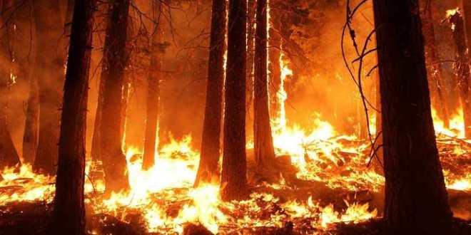 Incendie volontaire pour obtenir des vues sur Facebook