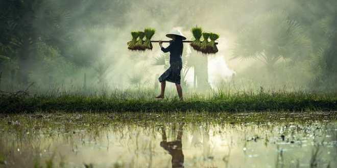 Hoax : Du riz plastique en provenance de Chine