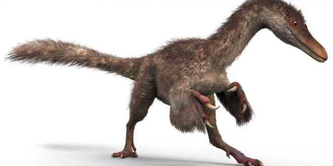 Découverte de plumes d'un dinosaure conservées dans de l'ambre