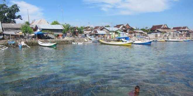 Les herbiers marins réduisent considérablement les bactéries pathogènes