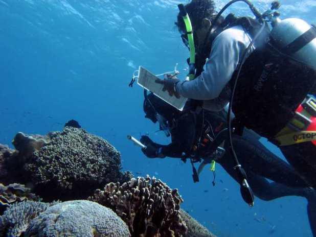 Le Dr Joleah Lamb et le Dr Syafyudin Yysuf qui étudient les coraux pour trouver des signes visuels de maladie dans les récifs indonésiens - Crédit : Courtney Couch