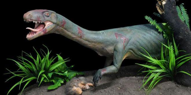 Découverte du Teleocrater rhadinus, le plus vieux cousin des dinosaures