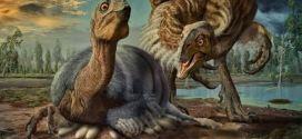 Le Beibeilong, un nouveau dinosaure proche de l'Oviraptorosaure