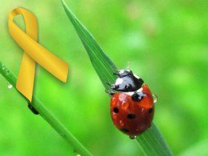 Zoe Ladybug