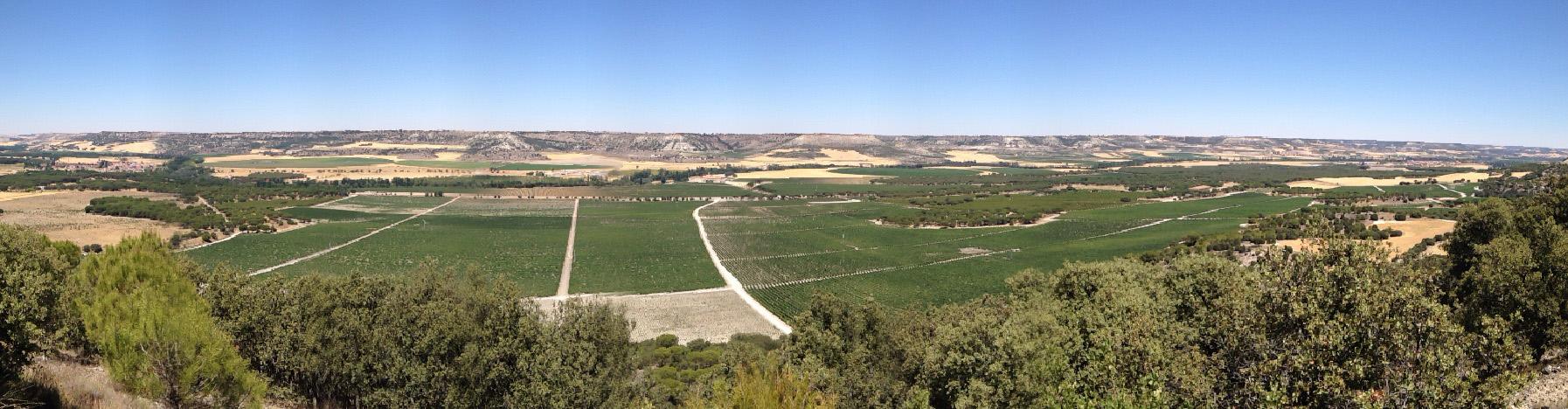 abadia-retuerta-bodega-ribera-del-duero