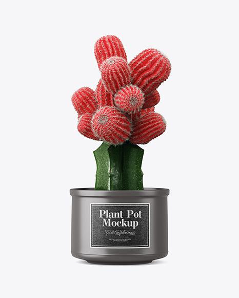 Cactus in Matte Pot Mockup