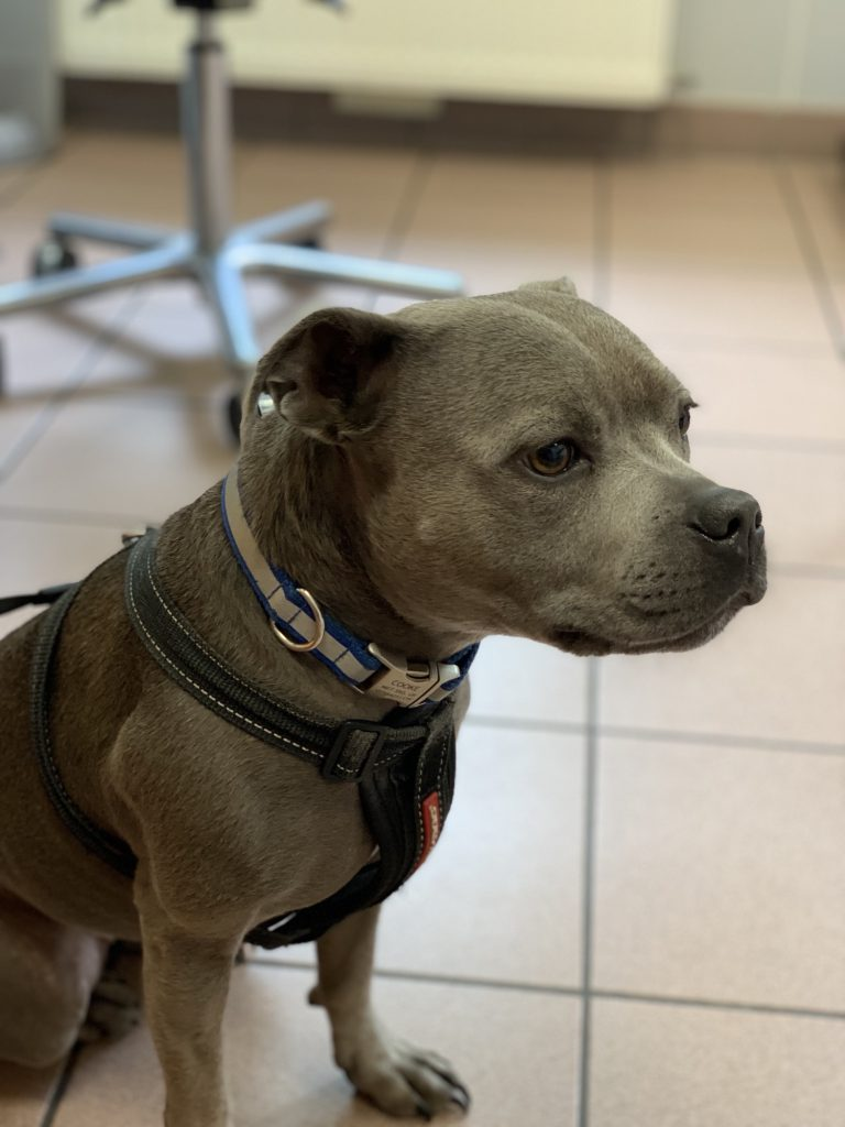 Pepper at the Vets