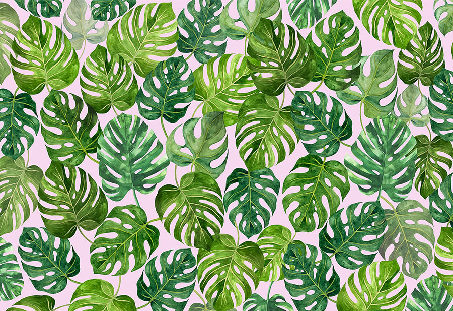 Green Leaf Swiss Cheese Plant Monstera Deliciosa Plant Wall Mural design