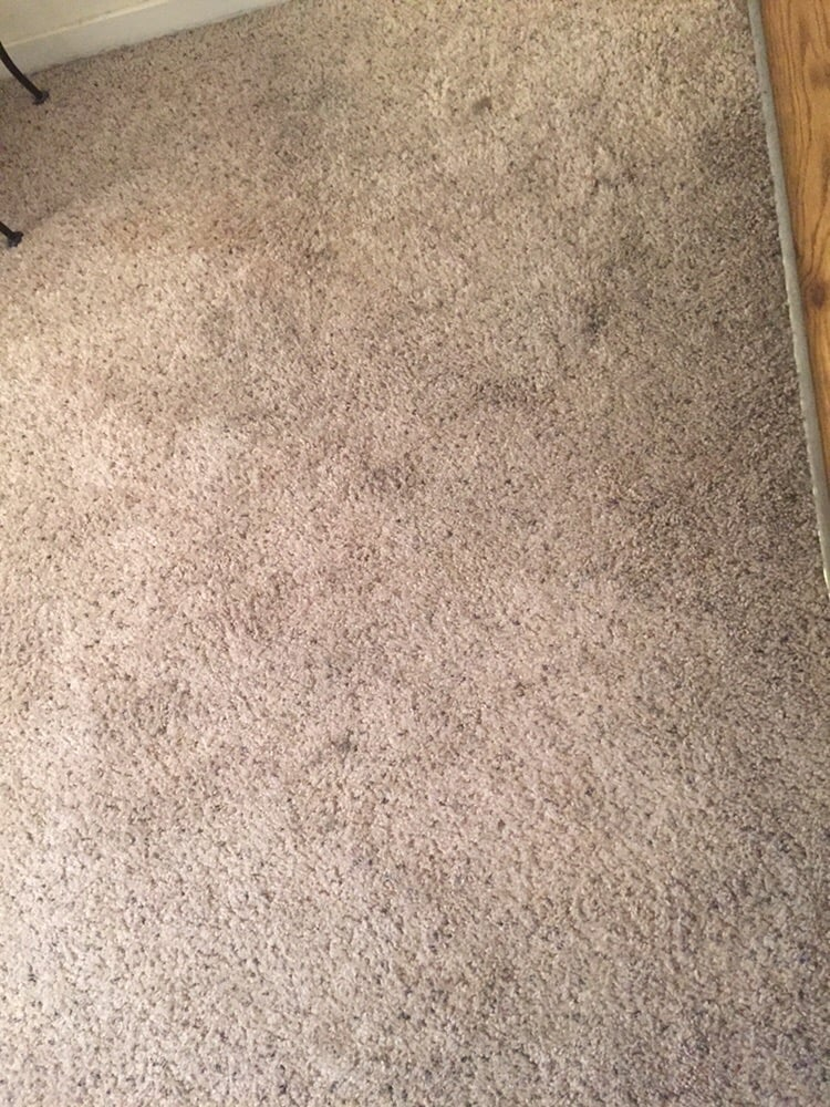 Image Result For How To Get Rid Of Musty Smell From Wet Carpet