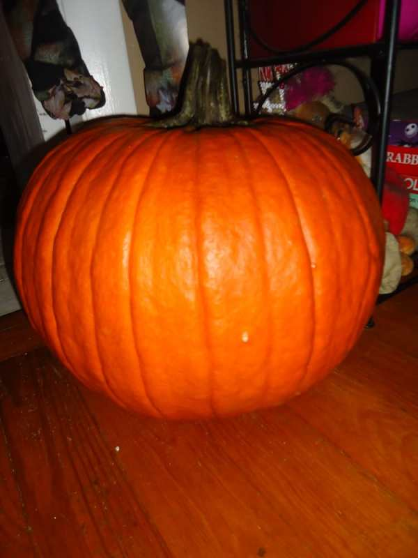 nice pumpkin for $10!! - Yelp