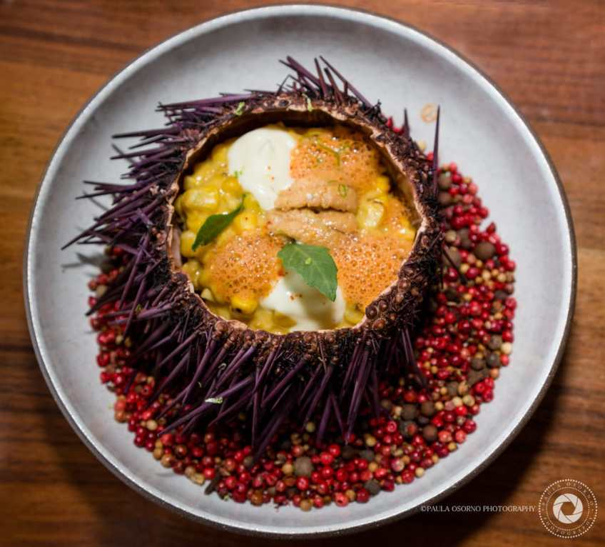 Image result for pao sea urchin
