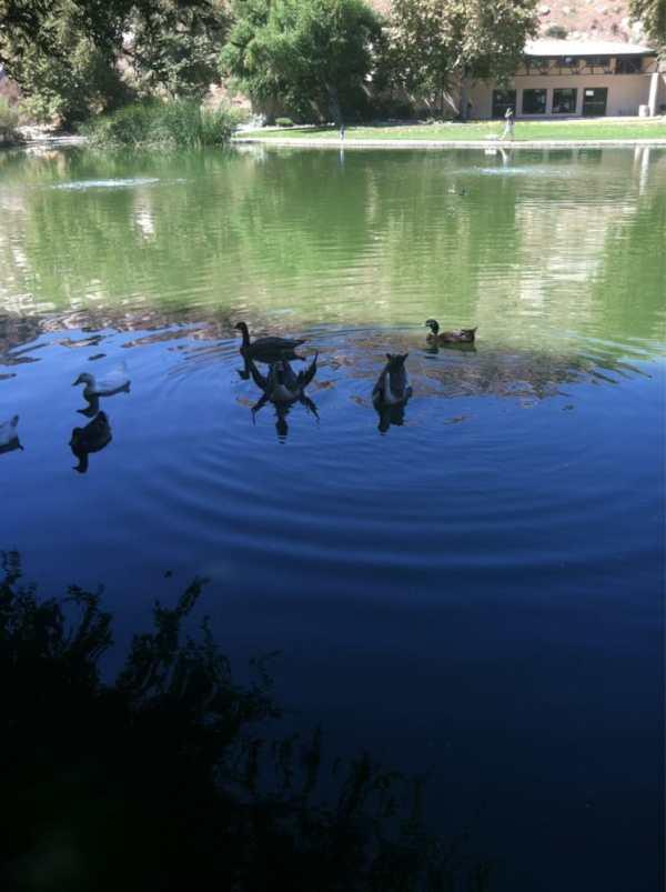 Ducks | Yelp