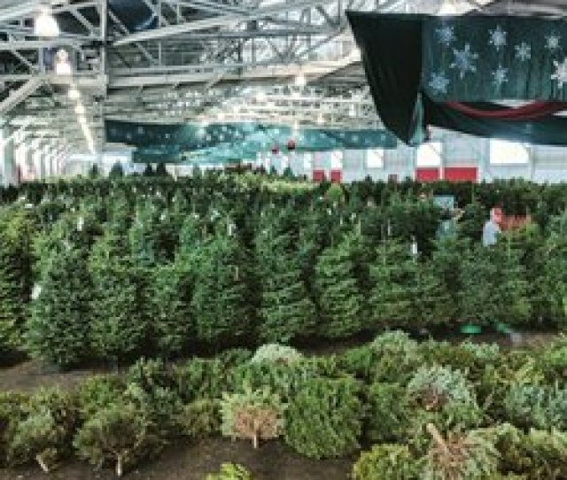 Photo Of The Guardsmen Christmas Tree Lot San Francisco Ca United States