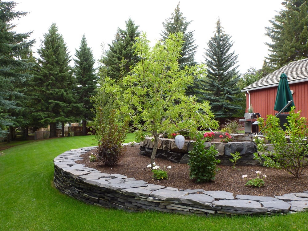 Ohio Buckeye tree among other landscaping - Yelp on Ab And Outdoor Living  id=34257