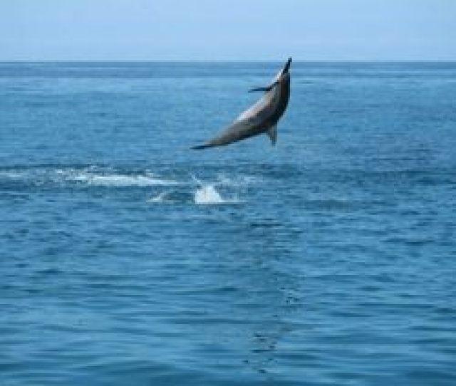 Photo Of Hawaii Island Ocean Tours Kailua Kona Hi United States
