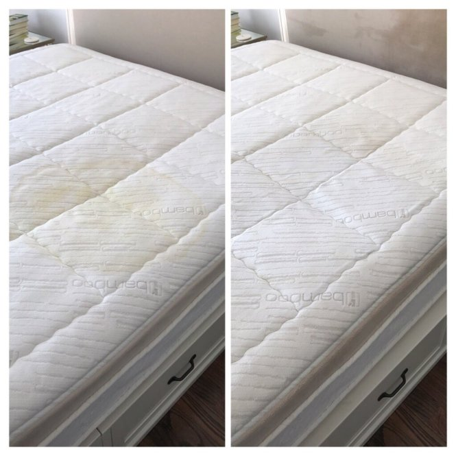 Miami Upholstery Cleaners 40 Photos 42 Reviews Carpet Cleaning 7738 Nw 116th Ave Fl Phone Number Yelp