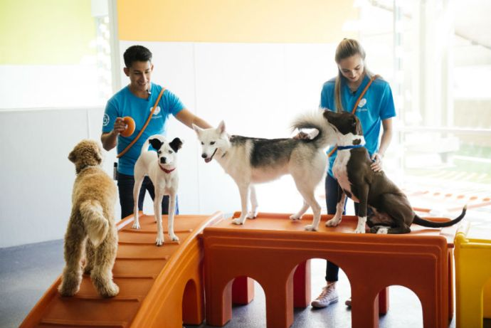 Dog behavior experts train four dogs at Dogtopia of Dallas – Inwood daycare.