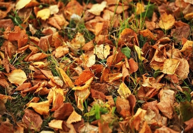 Should You Rake Leaves Fall